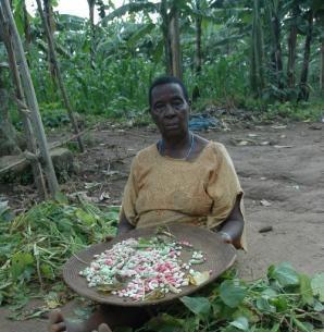 bonen schonen in Uganda © Marc van der Sterren