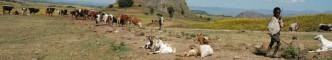 Hongersnood Ethiopië | © Marc van der Sterren | Farming Africa