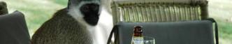 De onafhankelijkheidsgolf van de jaren zestig gaf het industriële bier een impuls. Bij een zelfstandig land hoorde een eigen biermerk, vonden de machthebbers. Lokaal geproduceerde biermerken als Tusker in Kenia waren goedkoper dan importbier als Heineken en daardoor toegankelijker voor de lokale bevolking. © Marc van der Sterren