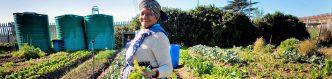 Zuid-Afrika Kleinschalige boeren